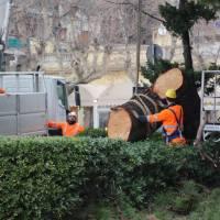 Perché il Comune taglia i nostri grandi alberi invece di curarli? Parliamone assieme a Barcola domenica 4 febbraio alle 10.30
